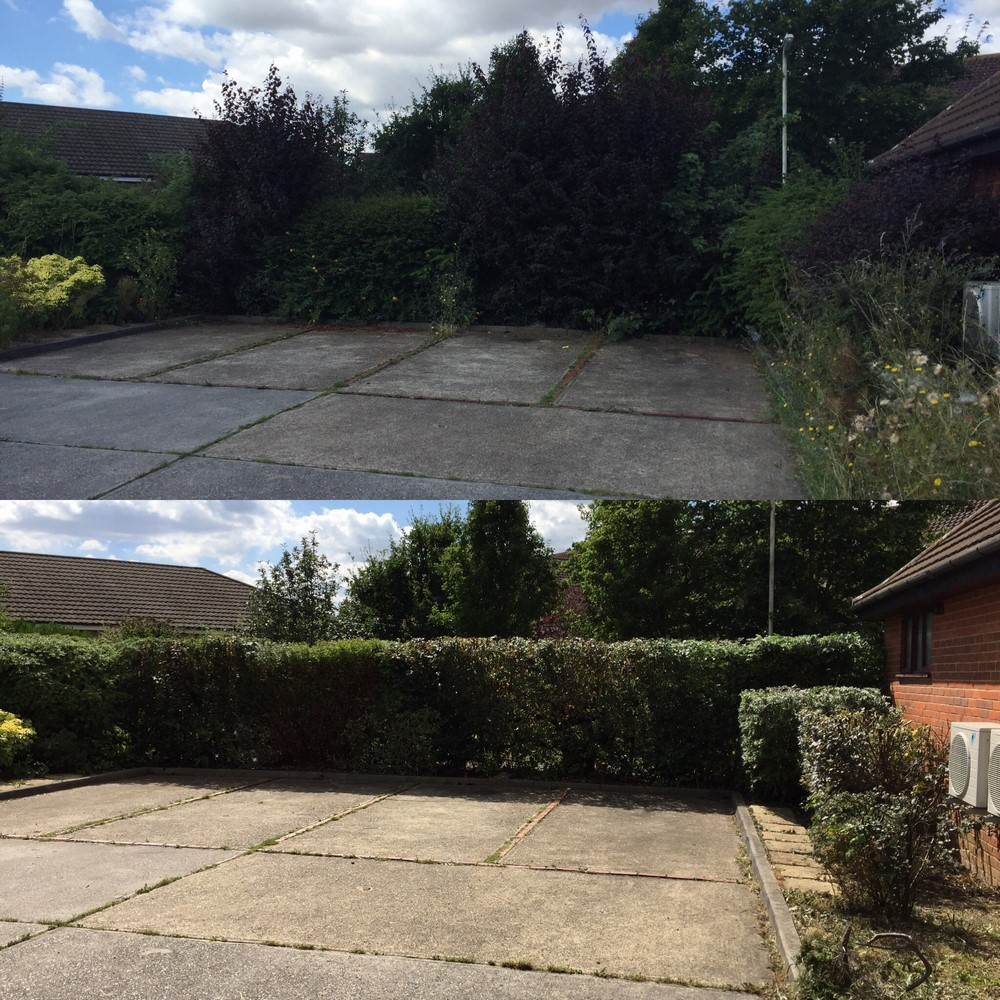trimmed hedge and woodchipper