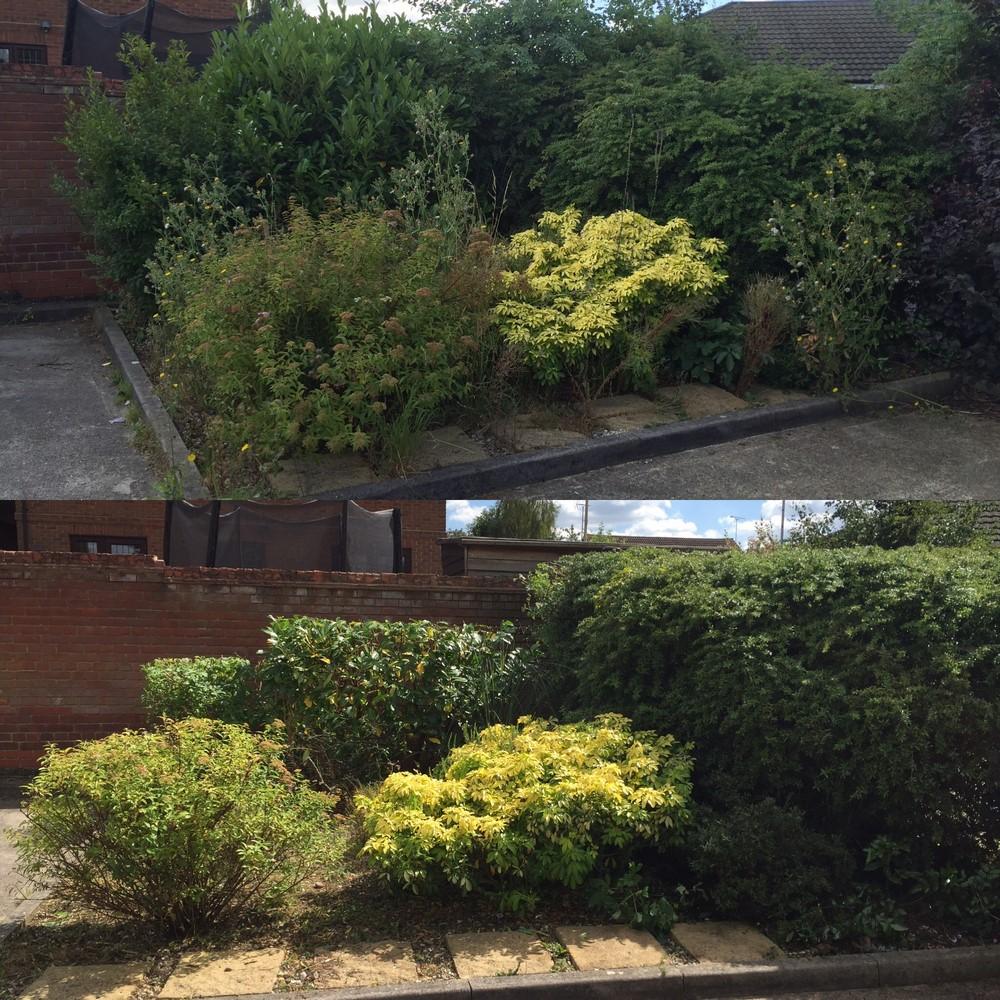 Flower bed garden bushes
